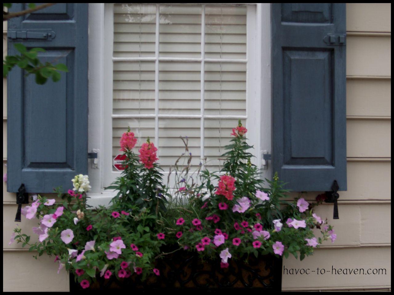 Charleston Window Boxes Havoc To Heaven